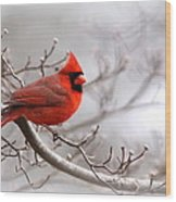 Img 2559-3 Wood Print