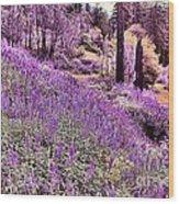 Img 4892_ Purple Lupine_ Yosemite National Park  Wood Print