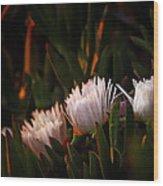 Img-9659 Wood Print