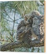 Immature Great Horned Owls Wood Print