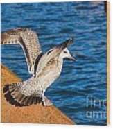 Immature Herring Gull At The Harbour Wood Print