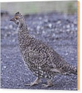 Immature Male Dusky Grouse Wood Print