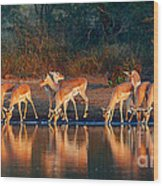 Impala Herd With Reflections In Water Wood Print