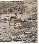 Impala Near Red River Wood Print