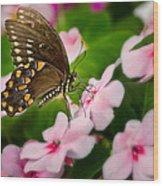 Impatient Swallowtail Wood Print