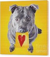 Imploring Staffie With A Sticky Note On His Mouth Wood Print