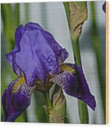 Impossible Imagined Iris Wood Print