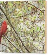 In A Dogwood Tree Wood Print