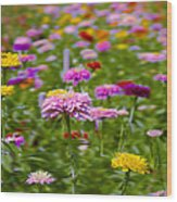 In A Field Of Flowers Wood Print