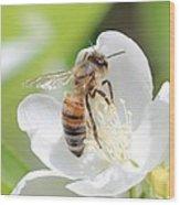 In A Mock Orange Blossom Wood Print