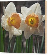 In Conversation - A Couple Of Daffodils Huddled Together Wood Print