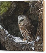 In Hiding Saw Whet Owl In A Hollow Stump Is Part Of The Birds Of Prey Fine Art Raptor Wildlife Photo Wood Print