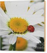In Love With A Ladybug And A Daisy Wood Print