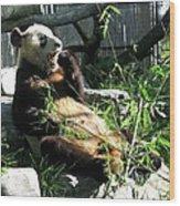 In Need Of More Sleep. Er Shun Giant Panda Series. Toronto Zoo Wood Print