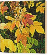 In Praise Of Yellow Wood Print