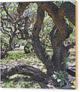 In The Depth Of Enchanting Forest Iv Wood Print