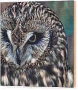 In The Eyes Of The Owl Wood Print