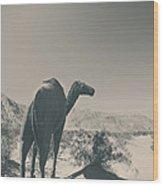In The Hot Desert Sun Wood Print