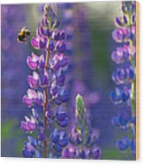 In The Land Of Lupine Wood Print by Mary Amerman