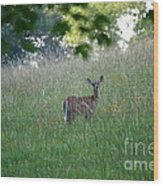 White-tailed Deer In Meadow  Wood Print