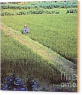 In The Rice Fields Wood Print