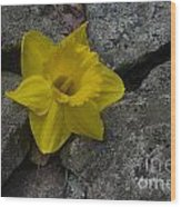 In The Rocks Wood Print