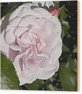 In The Rose Garden Wood Print