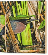 In The Shade Little Green Heron Wood Print