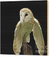 In The Still Of Night Barn Owl Wood Print by Inspired Nature Photography Fine Art Photography