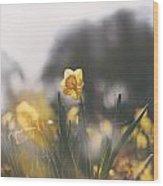 In The Sun Wood Print