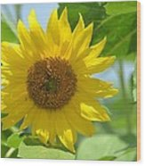 In The Sunflower Field Wood Print
