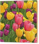 In The Tulip Garden Wood Print