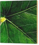 In The Viens Wood Print