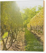 In The Vineyard Wood Print by Diane Diederich