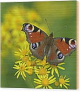 Inachis Io Butterfly On The Yellow Flowers Wood Print