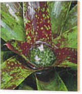 Inca Bromeliad Detail Wood Print