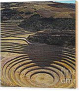 Inca Crop Circles At Moray Wood Print