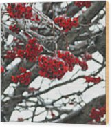 Incased Berries Wood Print