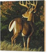Whitetail Buck - Indecision Wood Print by Crista Forest