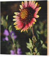 Indian Blanket Wood Print by Thomas Pettengill