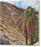 Indian Canyons View With Two Palms Wood Print