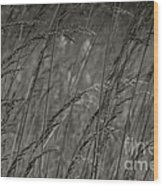 Indian Grass In The Wind Wood Print