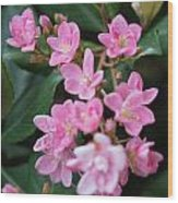 Indian Hawthorn Blossoms Wood Print