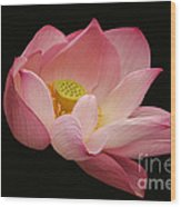 Indian Lotus On Black --- Sacred Light Wood Print