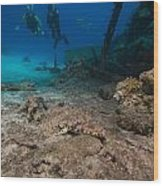 Indian Ocean Crocodilefish Papilloculiceps Longiceps In The Red Sea. Wood Print