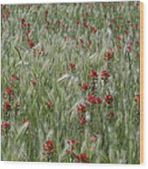 Indian Paintbrush And Foxtail Barley Wood Print