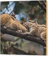 Indian Palm Squirrel Wood Print