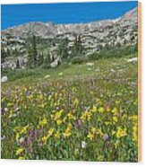 Indian Peaks Wildflower Meadow Wood Print
