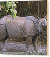 Indian Rhinoceros Wood Print by Mark Newman