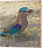 Indian Roller Wood Print